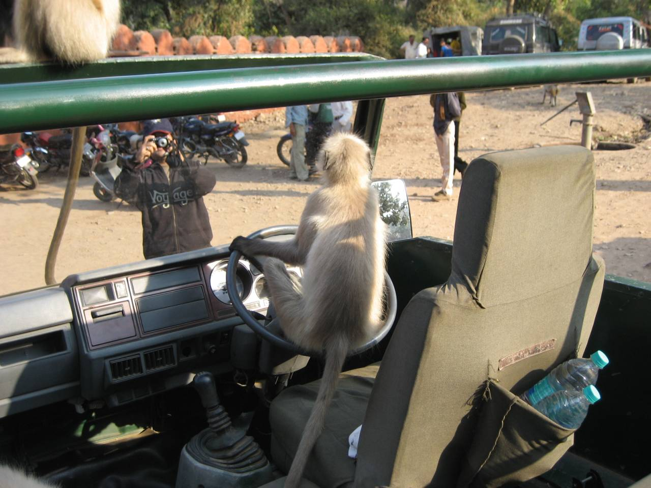 Langur monkey at the entrance of Ranthambhore National Park